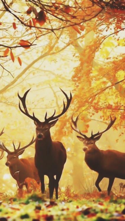 Fall Out Boy Desktop Wallpaper Fall Backgrounds Tumblr