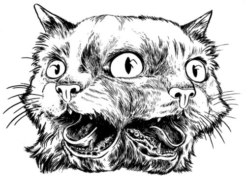 two headed cat on Tumblr