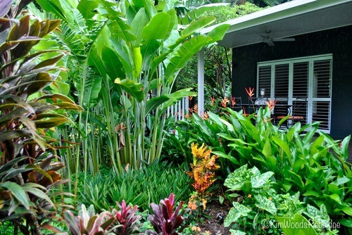 Our Australian Gardens — Tabu Tropical Paradise In Cairns Queensland