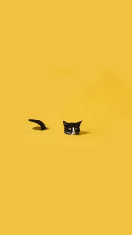 Cute Emoji Wallpapers Monkeys Sunflower Background Tumblr