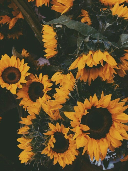 Amazing Iphone 5 Wallpapers Sunflower Background Tumblr