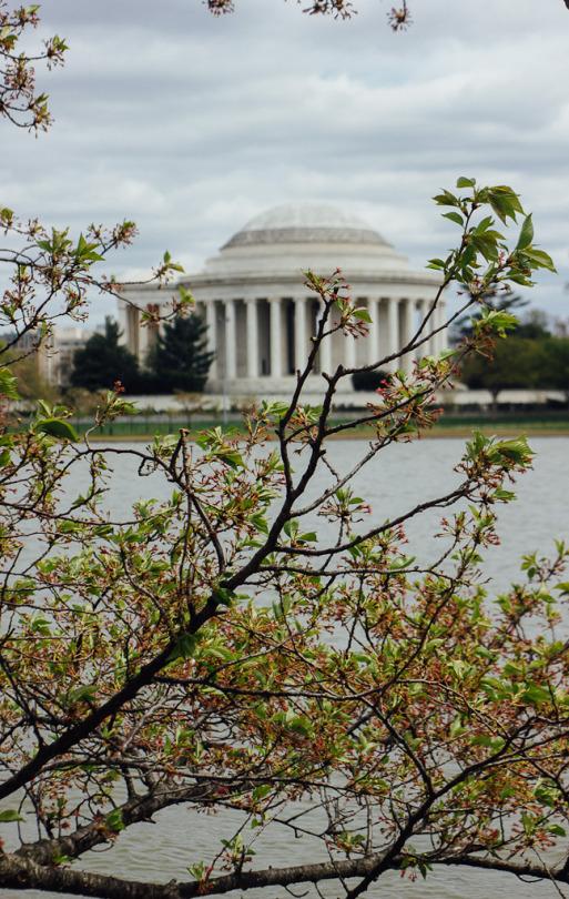 Washington DC cherry blossom national mall