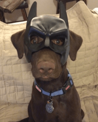 bat dog costume | Tumblr