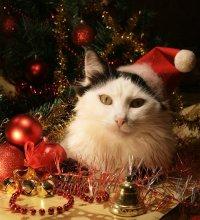 christmas cats on Tumblr