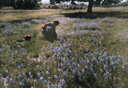 "maudelynn: "" Picking Wild Flowers, Santa Cruz c.1927 """