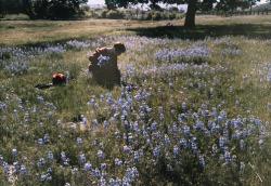 "maudelynn: "" Picking Wild Flowers, Santa Cruz c.1927 """