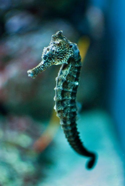 Exotic Animal Wallpaper Hippocampe On Tumblr