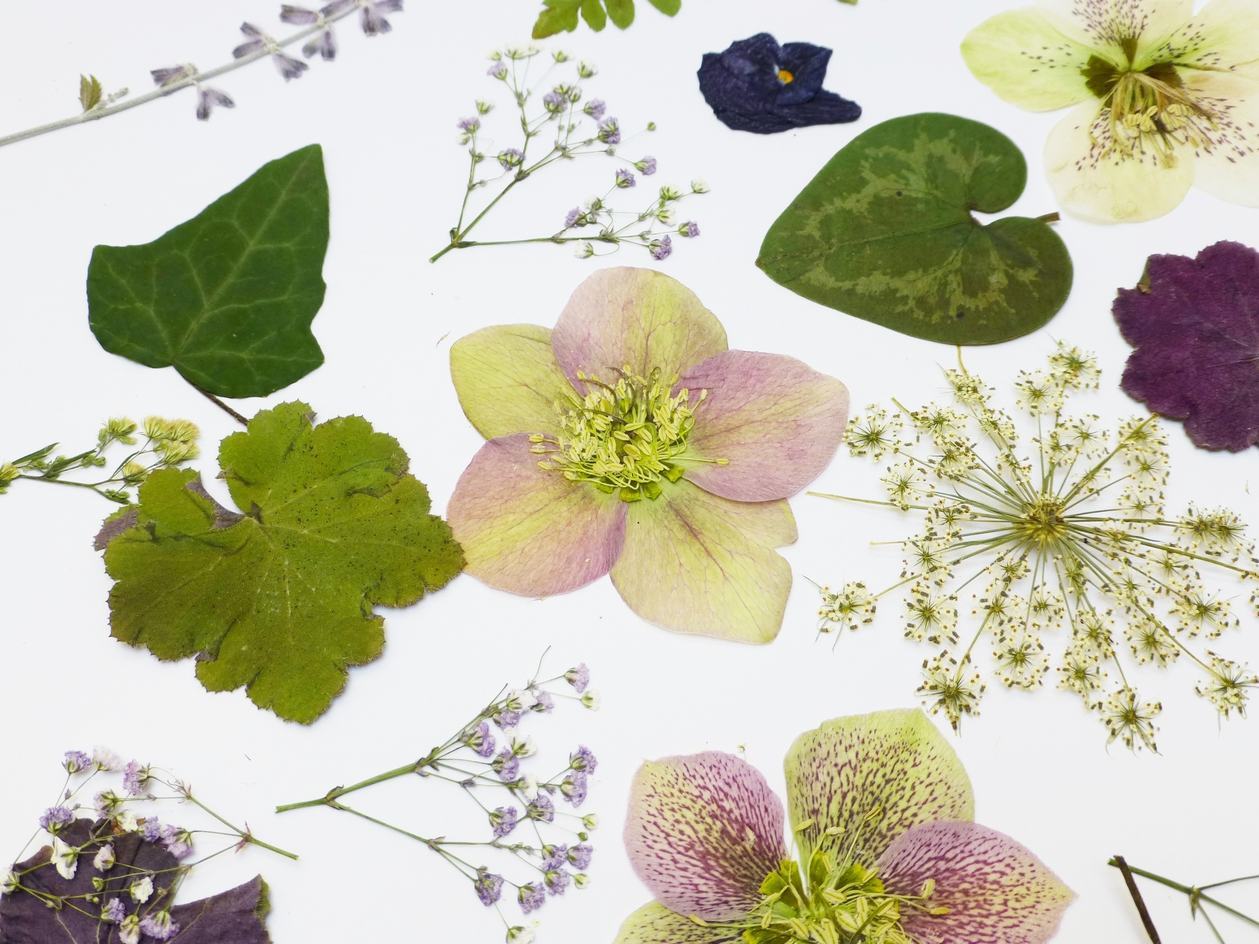 Pressed Flowers And Leaves, Romantic Mix For Special
