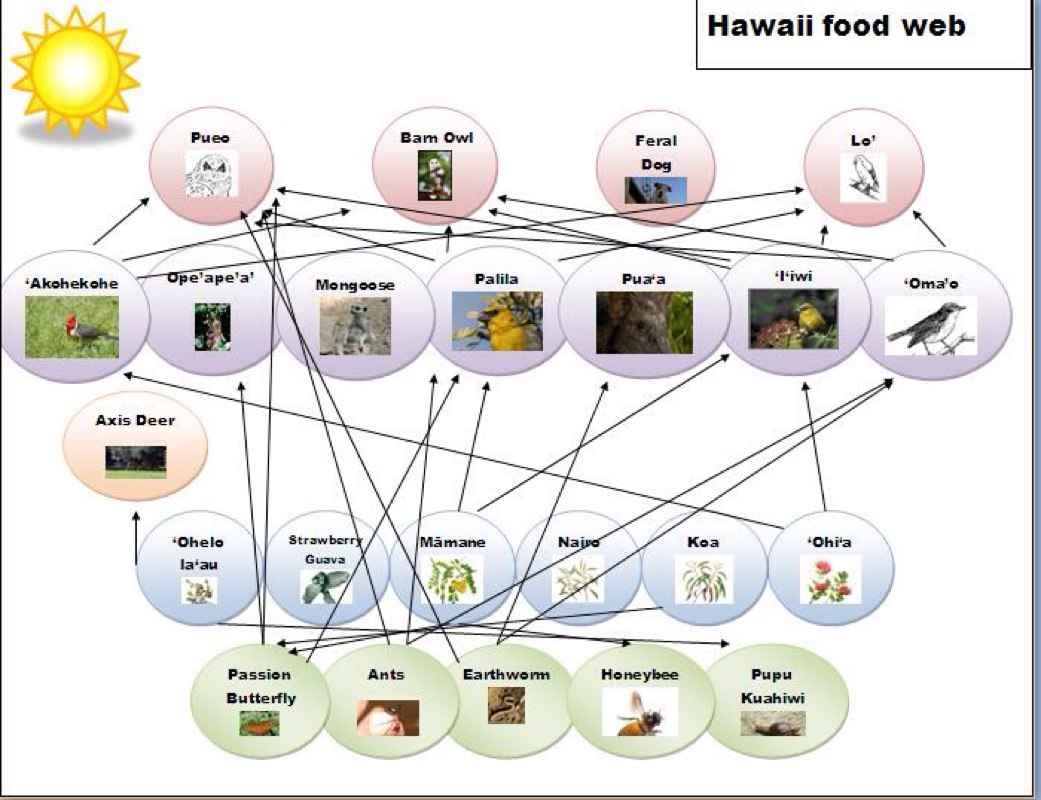 leatherback sea turtle food web diagram xbox 360 headset wiring hawksbill chain foodfash co