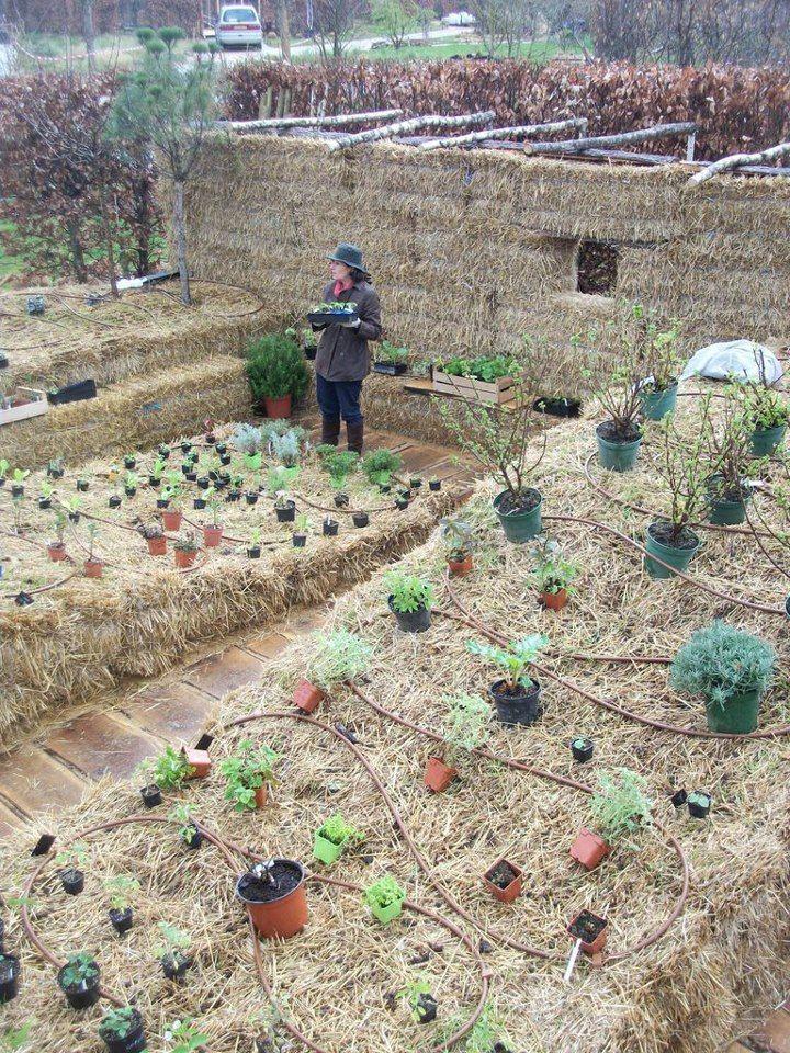 straw bale gardening in france with joel karsten 6ftmama com