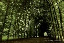 Laubengang aus Buchen im Schlosspark.