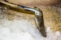 Der Fang wird zwischen dicke Eisschichten gepackt
