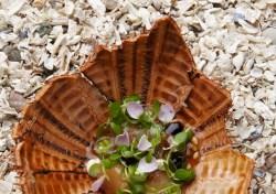 Seeigel und Wildblumen
