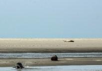 Auf der Sandbank