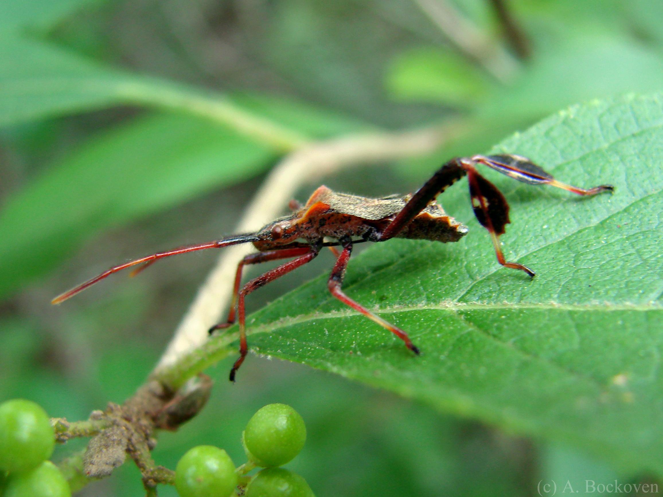 True Bugs  6legs2many