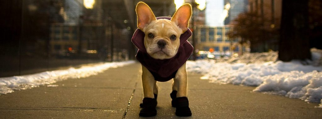 Winter Wear For Your Dog