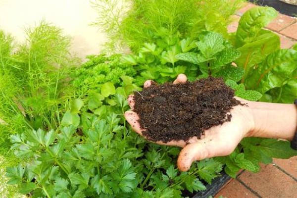 Что лучше торф чернозем или плодородный грунт. Что лучше торф или чернозем для огорода. Перегной и навоз