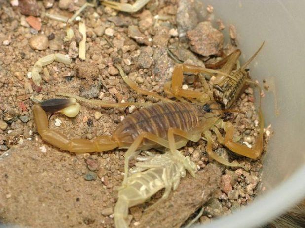 10 Sahara Desert Animals That Have Excellent Survival Abilities