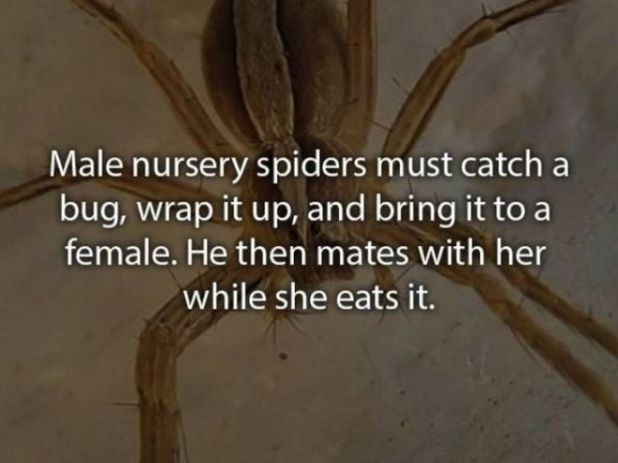 20 Craziest Animal Eating Habits You Never Knew About