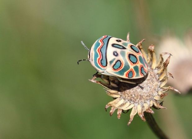 18 Insects That Are Really Beautiful