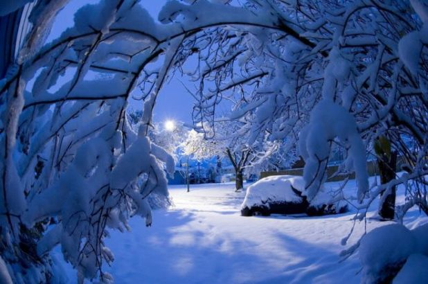 The Majestic Beauty Of Snowfall