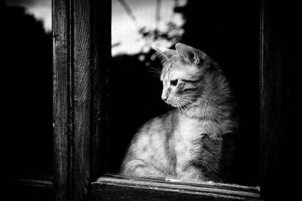 Sad Cats Waiting For Their Owner At The Window