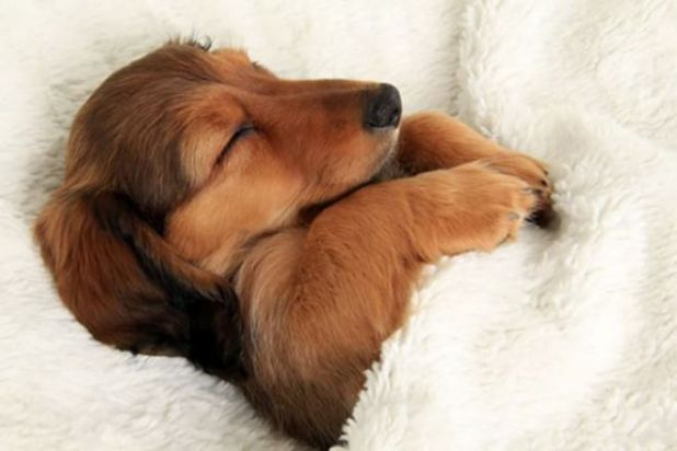 Sleepy Dogs Look Really Cute In These 18 Photos