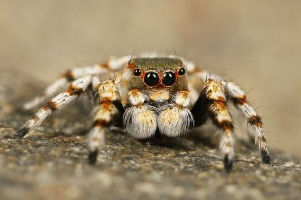 5 Surprising Reasons Why Spiders Are Not That Harmful To Humans