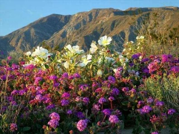 The Beautiful Desert Flowers Of Atacama