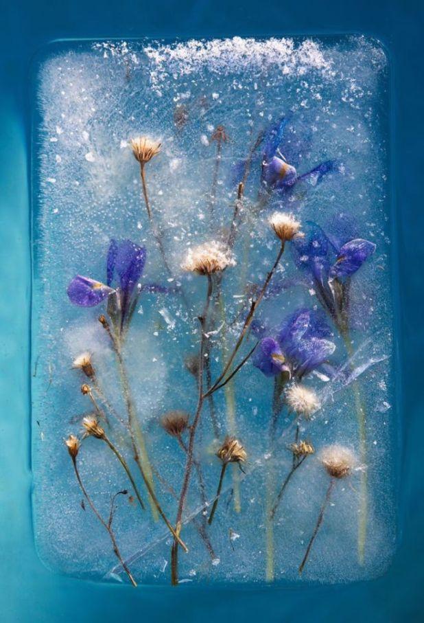 16 Beautiful Flowers Captured Frozen In Ice