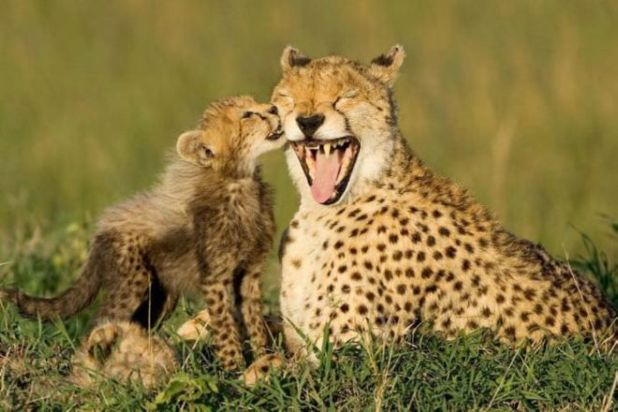 25 Pictures Of Most Adorable But Deadly Wild Animals