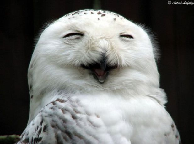 Cutest Pictures Of The Laughing Owls