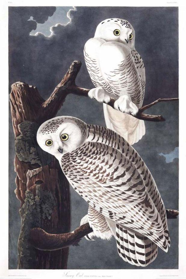 The Magnificent Birds Paintings Of Artist John J. Audubon