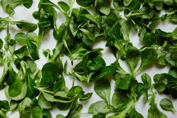 12 Nutritious Foods That Have Anti-Aging Properties