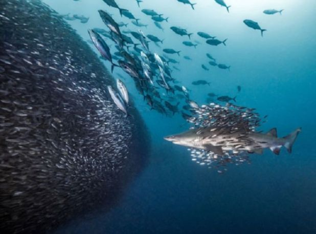 25 Top Entries From The Ocean Art Underwater Photography Contest