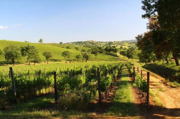 Top 20 Best Wine Regions Around The World