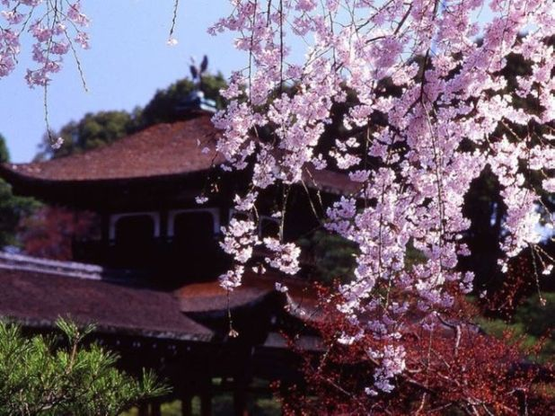 Beautiful Spring Season Pictures From Japan