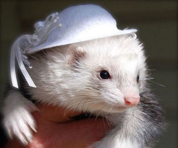 14 Animals That Look Cute In Hats