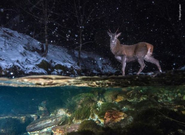 Top 18 Winners Of The Wildlife Photographer Of The Year 2018 Contest