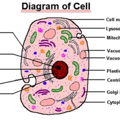 Human And Animal Cells Diagram Mgf Ignition Wiring 7g Aug 30 Sep 3 Week 5  712sciyesprep 39s Blog