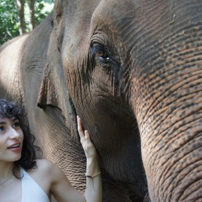 I LIVED WITH ELEPHANTS IN THAILAND