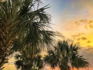 A Week Away. Palm trees with an orange and colorful sky background.