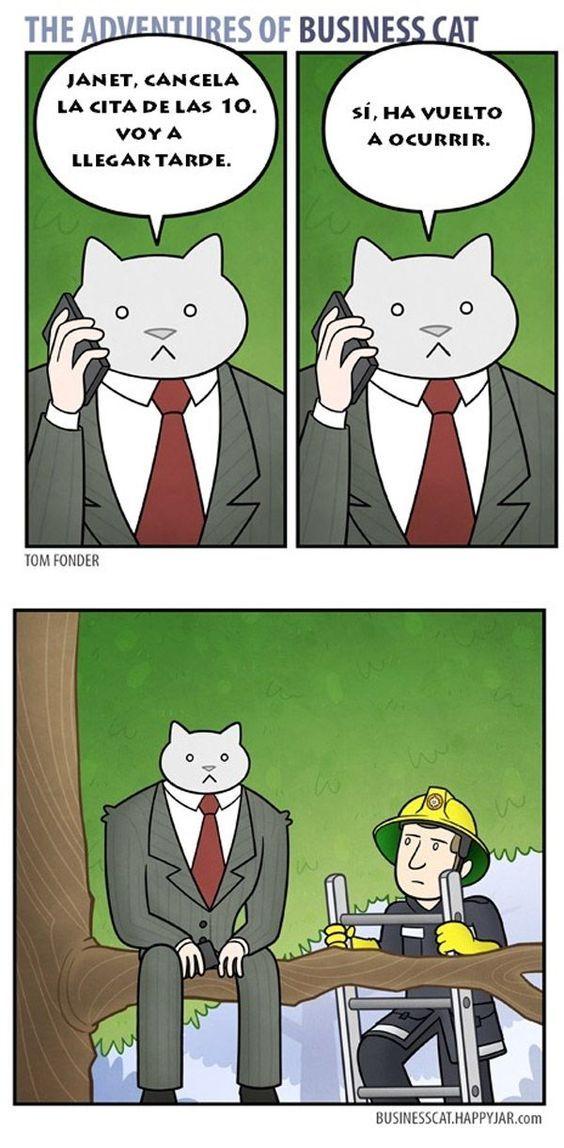 Un gato siempre sera un gato