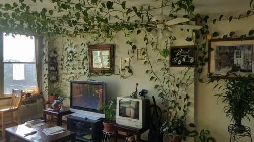 Plants And Interior Design Tumblr