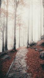 coklat aesthetic brown fall backgrounds autumn lockscreens hd simple nature unduh woods font terbaru scenery