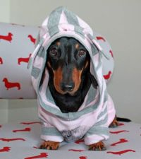 dachshund clothing
