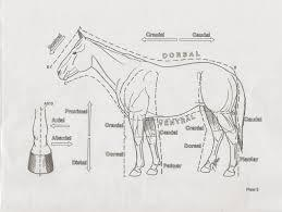 Equine-101 — Directional terms and diagrams of equines.