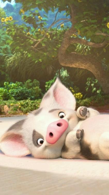 Cute Piglets Wallpaper Cerditos On Tumblr