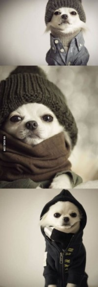hipster dog on Tumblr