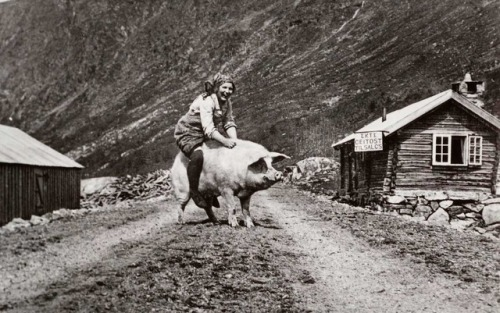 Milkmaid trying to get a pig out of the road - Norway 1932 Check this blog!